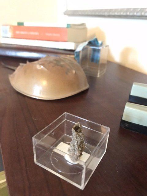 Horseshoe Crab and Fulgurite