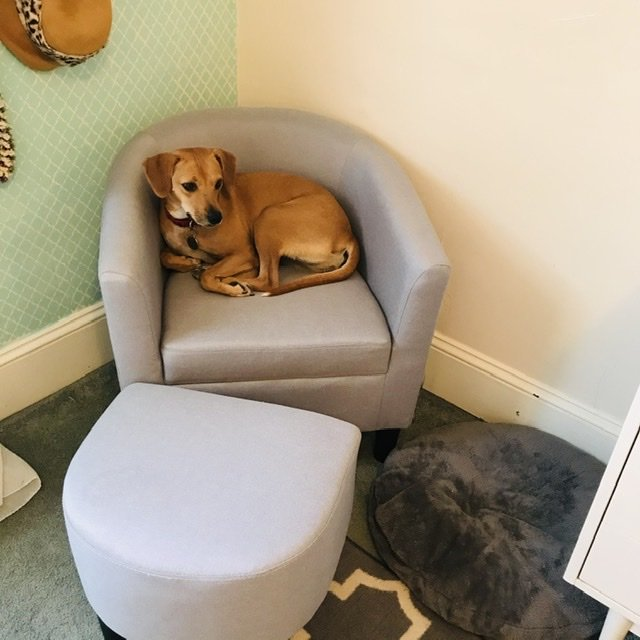 Splurge chair with dog in it